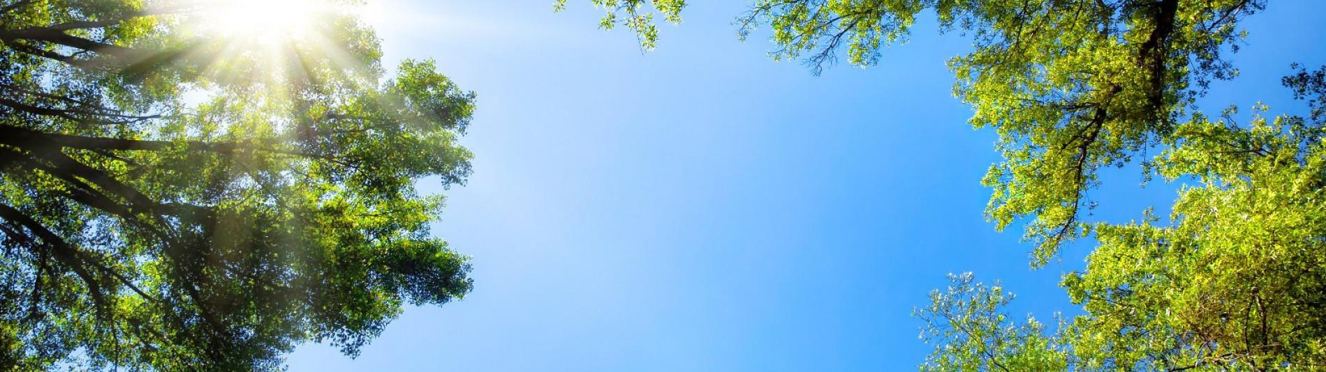 Sonnenschein auf Bäumen und PV Anlage